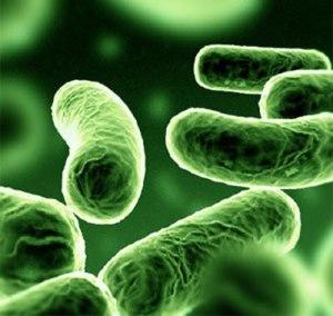 bacteria-kpc